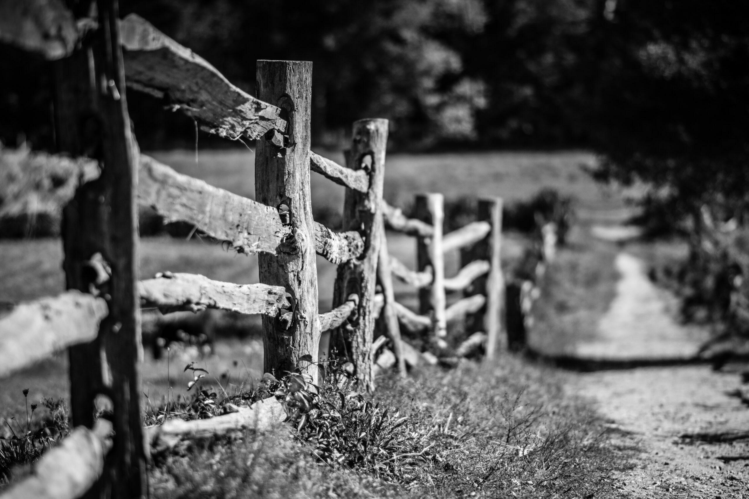 Retoma el Camino